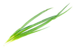 Fresh green onions  isolated  on  white Stock Images