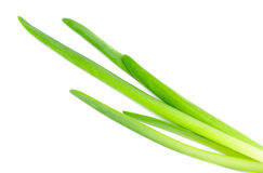 Fresh green onions isolated on white Stock Image