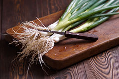 Fresh green onions with roots. Rustic Stock Images