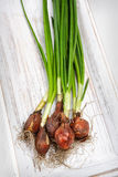Fresh green onions Stock Photo