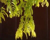Fresh green opposite brown Stock Photography