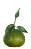 Fresh green orange Stock Images