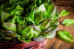 Fresh green organic lettuce in the basket on a wooden background Stock Photography