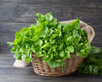 Fresh green organic lettuce in a basket Royalty Free Stock Photography