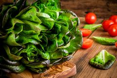 Fresh green organic lettuce with cherry tomatoes on a wooden background Royalty Free Stock Photography