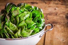 Fresh green organic lettuce in a colander Stock Photo