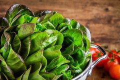 Fresh green organic lettuce with tomatoes in a colander closeup Stock Photography