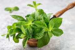 Fresh green organic mint close-up royalty free stock photography