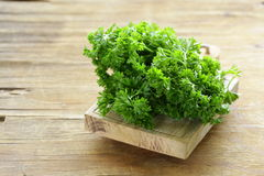 Fresh green organic parsley Stock Image