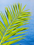 Fresh green palm leaf above blue sea Stock Photos