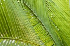 Fresh green palm leafs Stock Photo