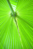 Fresh and green palm leaves Stock Photo