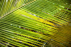Fresh green palm leaves background. For design or wallpaper Stock Photo