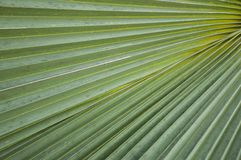 Fresh green palm leaves texture Stock Photo