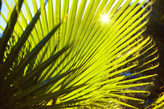 Fresh green palm tree leaf Stock Photo