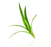 Fresh green pandan leaves isolated on white Stock Images