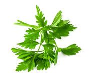 Fresh green parsley Royalty Free Stock Image
