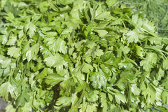 Fresh green parsley background Royalty Free Stock Images