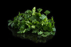 Fresh green parsley on black background.  Royalty Free Stock Photos