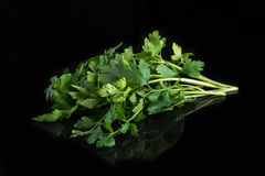 Fresh green parsley on black background.  Royalty Free Stock Images