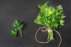 Fresh green parsley in bunch on black slate background. Copy space Royalty Free Stock Photography