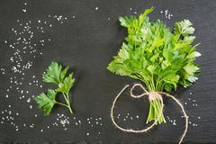 Fresh green parsley in bunch on black slate background. Copy space Stock Photo