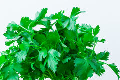 Fresh green parsley. Close up of fresh green parsley Royalty Free Stock Images