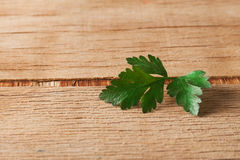 Fresh green parsley. Food ingredients. Healthy food Royalty Free Stock Photography