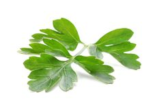 Fresh green parsley. On white background Royalty Free Stock Image