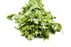 Fresh green Parsley of the garden Stock Photos