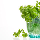 Fresh green parsley herbs Stock Photos