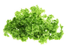 Fresh green parsley isolated Royalty Free Stock Images