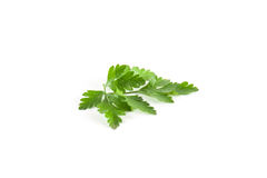 Fresh green parsley. Isolated. Food ingredients. Healthy food Royalty Free Stock Photography