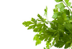 Fresh green parsley. Isolated. Food ingredients. Healthy food Stock Photography