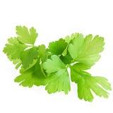 Fresh Green Parsley Isolated On White Background Royalty Free Stock Photos
