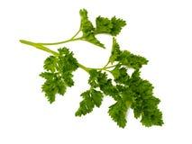 Fresh green parsley Stock Photos