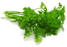Fresh green parsley. Isolated on white background Royalty Free Stock Photo