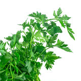 Fresh green parsley isolated on white background, food ingredien. T Royalty Free Stock Image