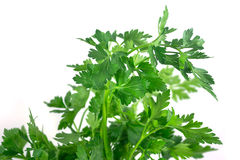 Fresh green parsley isolated on white background. Food ingredient Royalty Free Stock Image