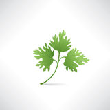 Fresh green parsley isolated on white Salad healthy food icon Royalty Free Stock Photography