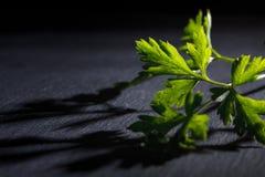 Fresh green parsley leaf. On black background Royalty Free Stock Photos