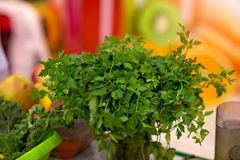Fresh green parsley in a pot. Home gardening Stock Images