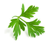 Fresh green parsley. On a white background Stock Photography