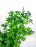 Fresh green parsley  on white background. Food ingredient Stock Photo