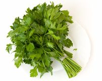 Fresh green parsley a white plate Stock Images