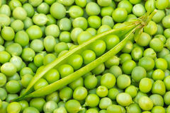 Fresh green pea pod Stock Photography