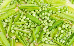 Fresh green pea pod Royalty Free Stock Photo