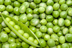 Fresh green pea pod on peas background Stock Photography