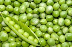 Fresh green pea pod on peas background Stock Photography