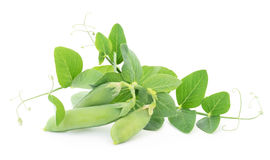 Fresh green pea Stock Photography